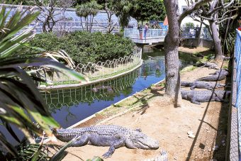 Atagawa Tropical & Alligator Garden