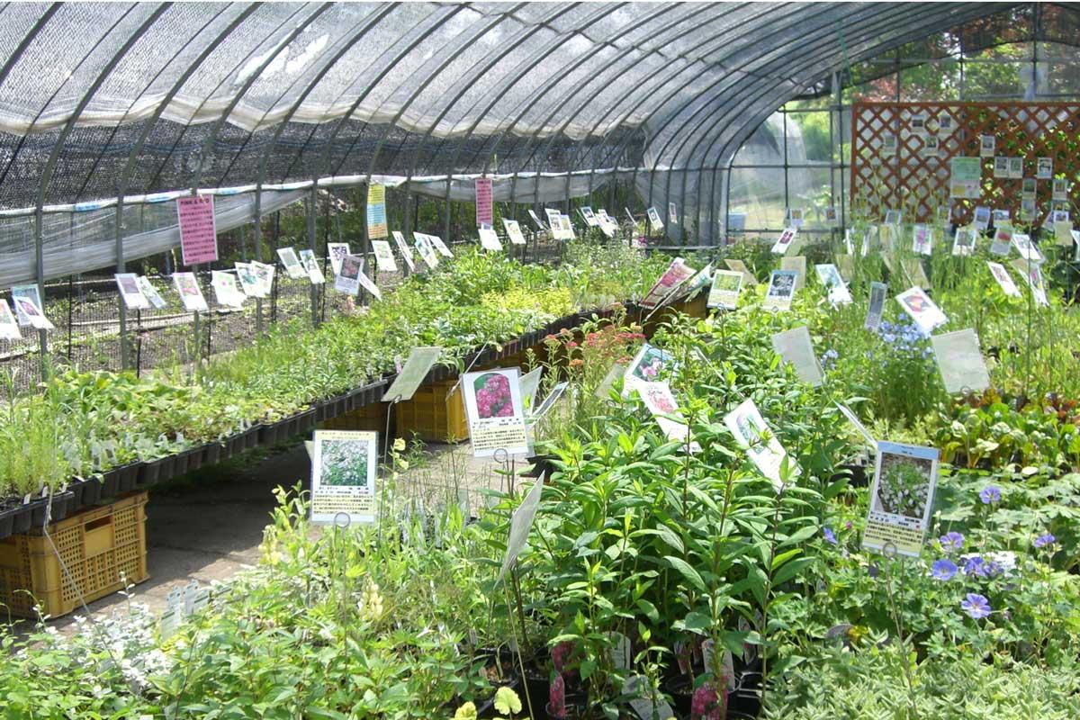 Ueno Farm