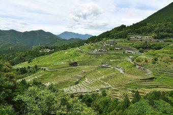 Maruyama Senmaida Terraced Rice Fields
